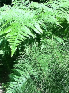Ferns and Horsetail
