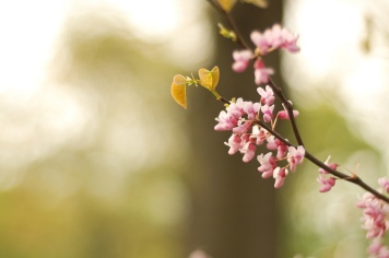 Flowers by cfourcalvin